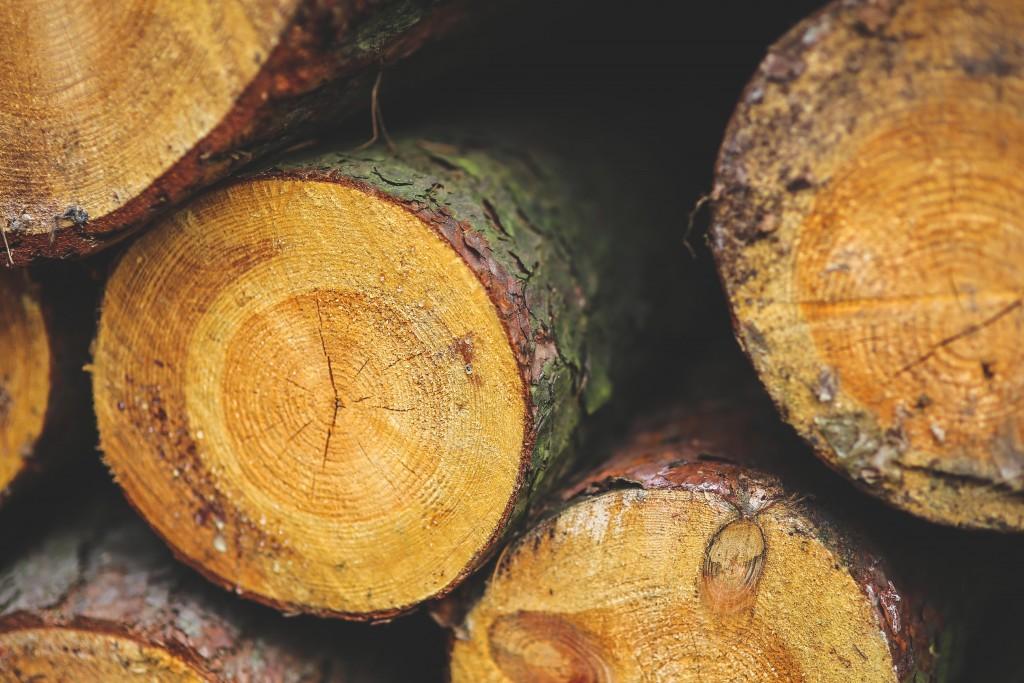 Tipos y calidades de madera en casas de madera