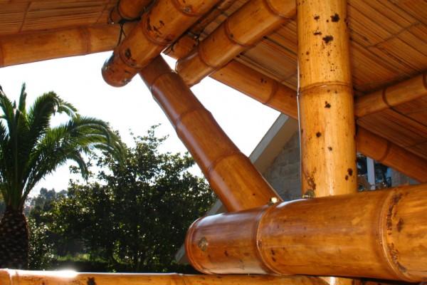 Casa increíbles en Bambusa 1061