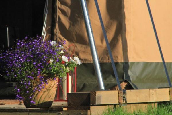 Jaimas, Tipis y Yurtas en Safari Tents 5113